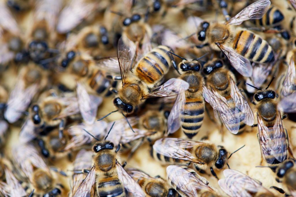 Wildbienen nisten an Blaubeurer Stadtmauer