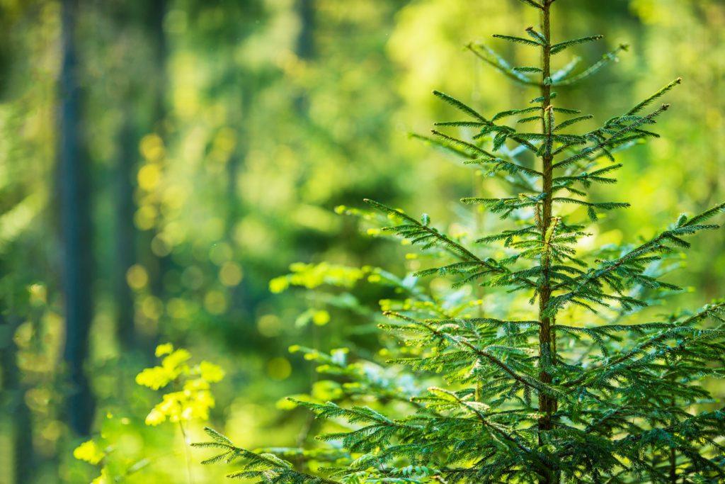 Landratsamt mahnt zu rücksichtsvollem Umgang mit unserem Wald