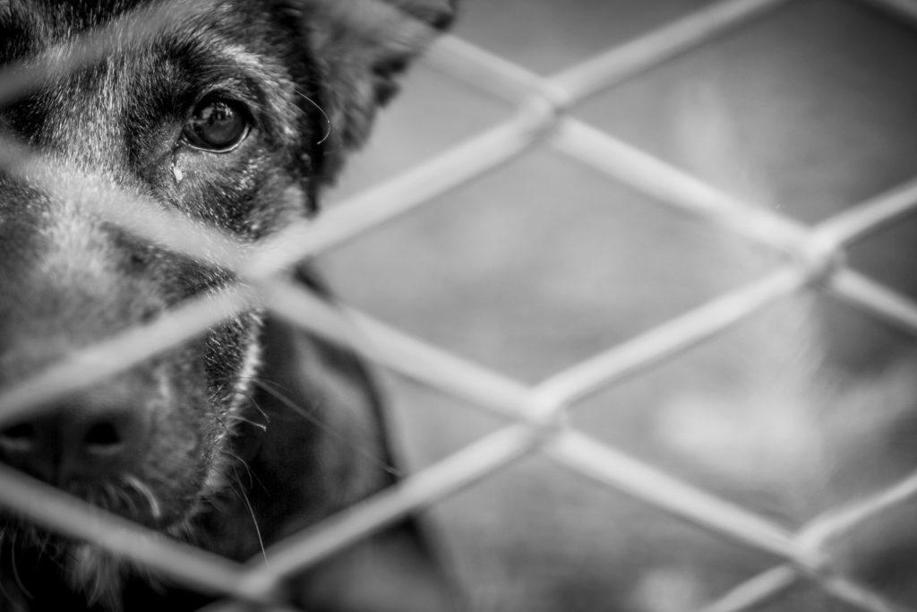 Illegale Tierzucht aufgedeckt